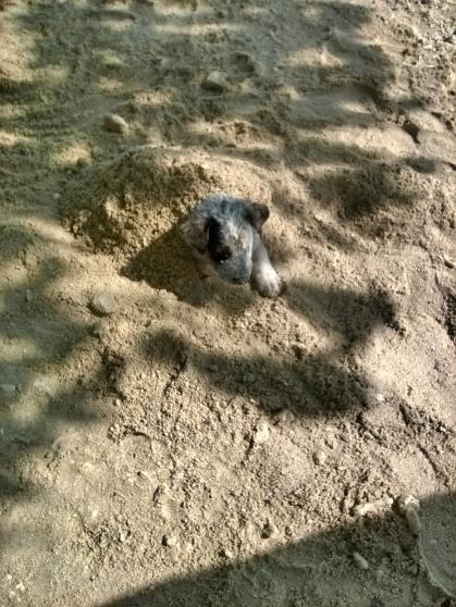 help mom buried me.