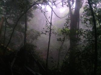 Wildlife Preserve central island